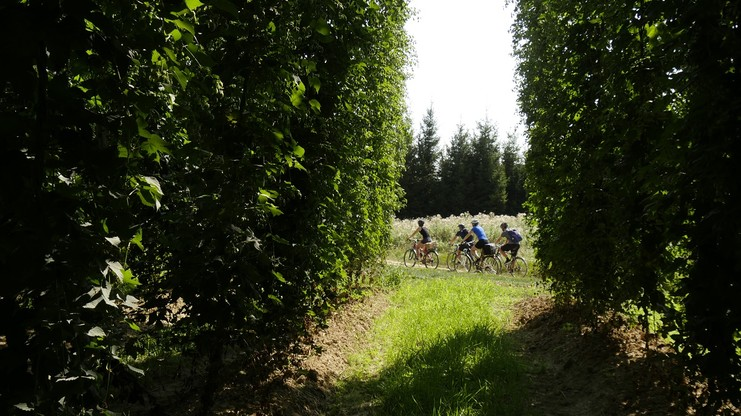 Radtour durch die Hopfengärten